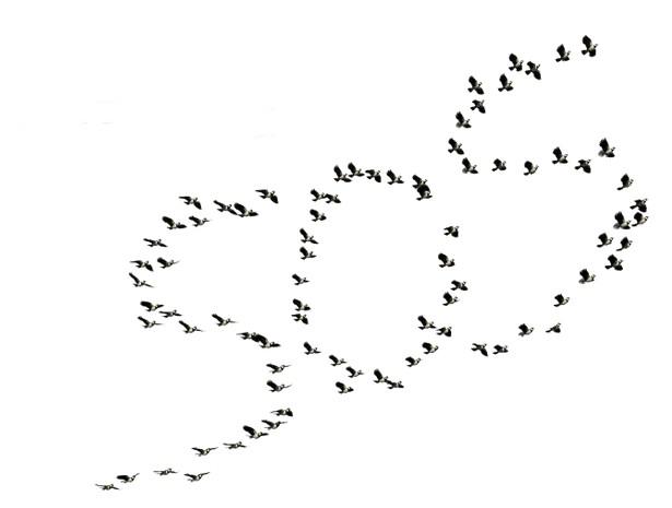 sos oiseaux en danger
