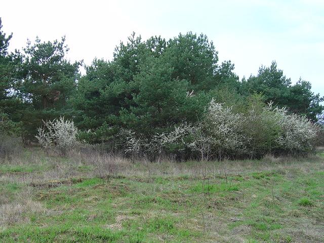 33 hectares d espace naturel sauvegarder nouvelles - Terrain militaire a vendre ...
