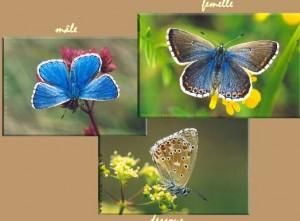 Données Fa/Fl dans Accueil argus-bleu-300x221